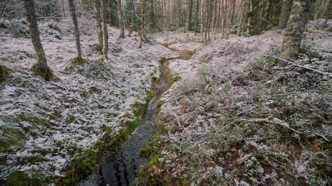Велосипедный/пеший маршрут лесной тропой между первым и вторым фонтанами