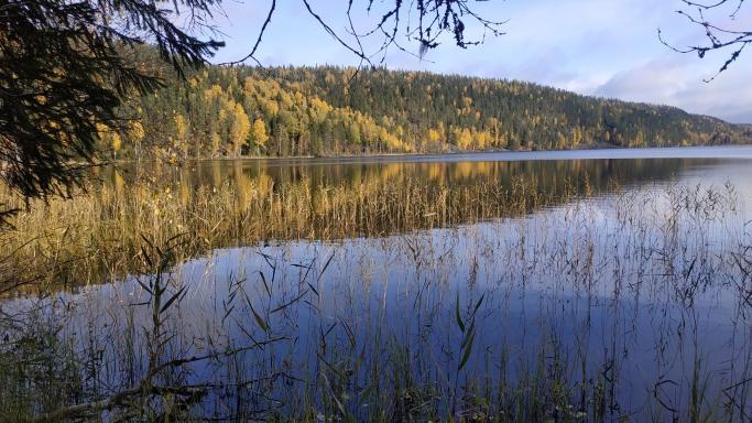 Пеший поход выходного дня: р. Янисйоки - оз. Хауккаярви - оз. Ристиярви - Ладожское озеро