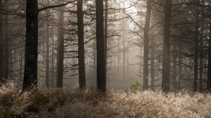 Медвежья тропа Karhunkierros trail (Финляндия)