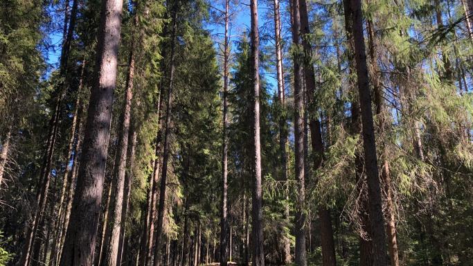 Зеленая Тропа в центре Петрозаводска